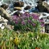 Primavera diffusa: da oggi a Scicli.
