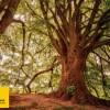 Il 21 novembre Festa dell'albero anche a Scicli. Organizza Legambiente.