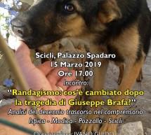 Randagismo dopo una tragedia: incontro il 15 marzo a Palazzo Spadaro