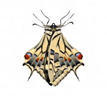 'Walter Silvestrini_Animalium Trinacriae' : apertura sabato 30 marzo alla Quam di Scicli.