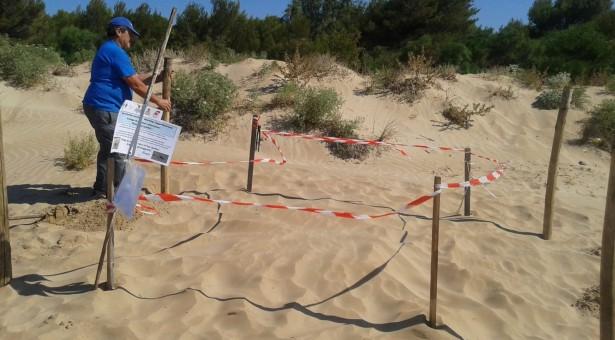 Una tartaruga caretta caretta depone le uova sulla spiaggia di Sampieri.