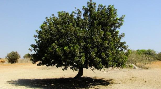 """Festa dell'Albero 2019. Legambiente: a Scicli si piantano alberi e si avvia l'iniziativa """"Alberi per il Futuro"""""""