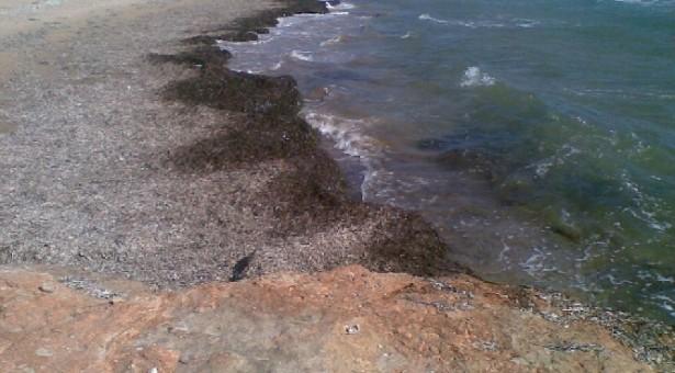 Domenica 24, Volontari puliranno la spiaggia di Ponente a Donnalucata