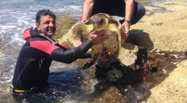 Salvata una tartaruga a Sampieri