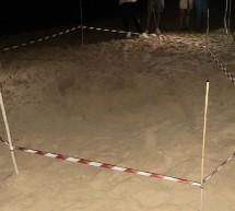 Tartaruga caretta caretta depone 120 uova  sulla spiaggia di Playa Grande.